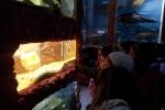 akvarium_2014-6