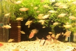 akvarium_2014-1